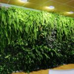Giardino verticale interno per studio privato
