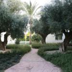 Come sistemare il giardino: 7 consigli utili per la manutenzione del giardino