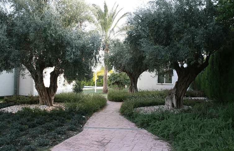 come fare manutenzione giardino