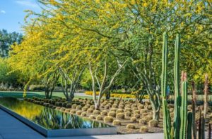 Giardino delle succulente e delle cactee