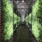Irrigazione e sistemi di fertirrigazione per giardini verticali