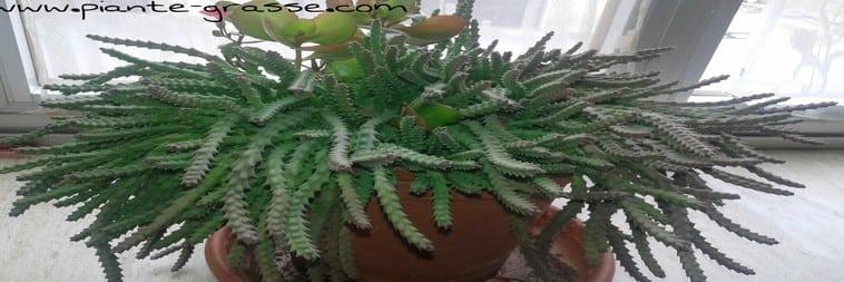 Quali piante scegliere per il proprio giardino verticale - Piante per giardino verticale ...
