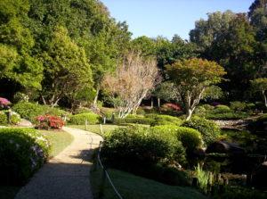 Progettazione di aiuole per il giardino: ecco come fare