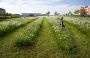 Le migliori idee per la progettazione del tuo giardino