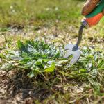 Fitostimolanti per le piante: cosa sono e come utilizzarli