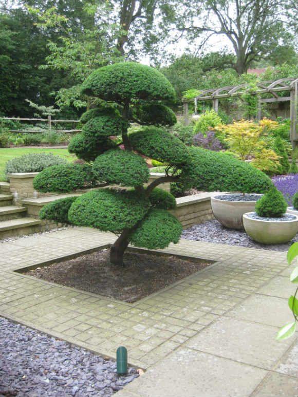 piante zen quali piante utilizzare in un giardino zen giopponese per  meditazione