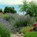 """Come realizzare un giardino, guida """"fai da te"""" DEFINITIVA (come fare, idee, costi)"""