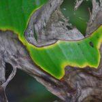 Le più comuni 5 malattie delle piante e come curarle