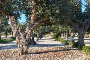 Giardino Mediterraneo 2020