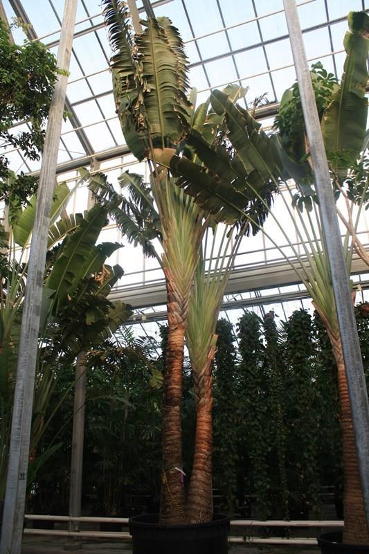 http://fachjan.nl/wp-content/themes/fechjantheme/plant_image/38198.jpg